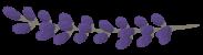 Levanda-flower